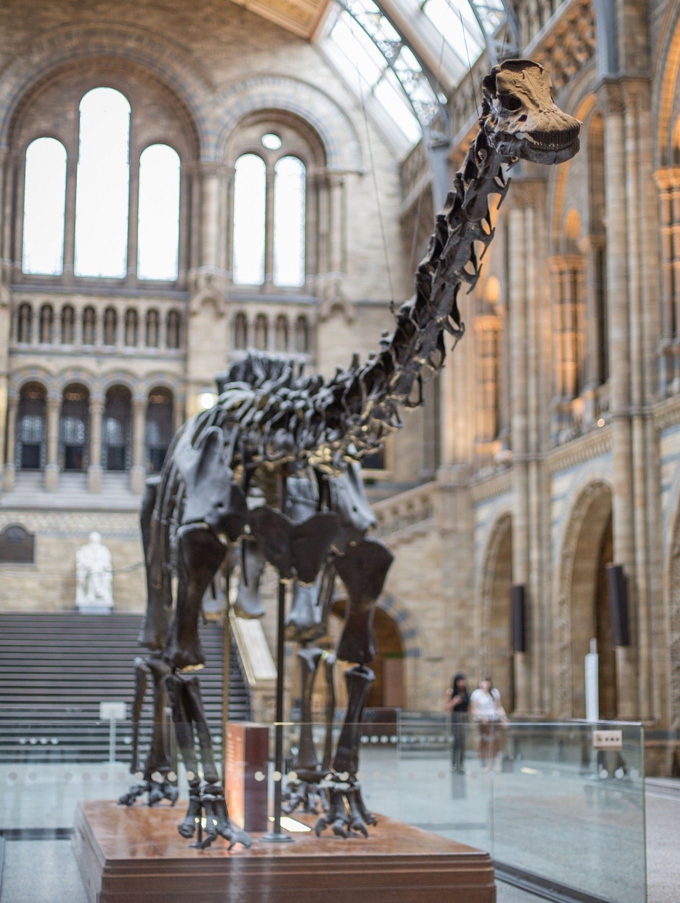 Dippy Norwich Cathedral