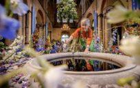 image from Chichester's Online Flower Festival