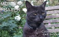 image from Canterbury Cat Launches Fundraiser