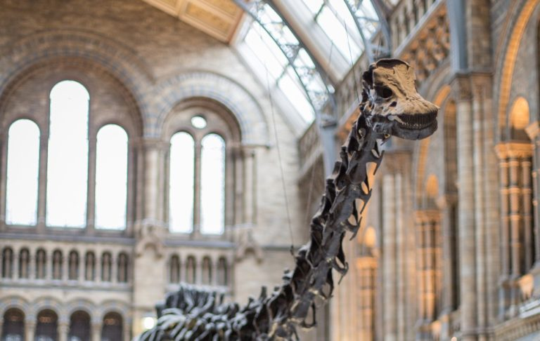 image from Dippy the Dinosaur - Dates Confirmed