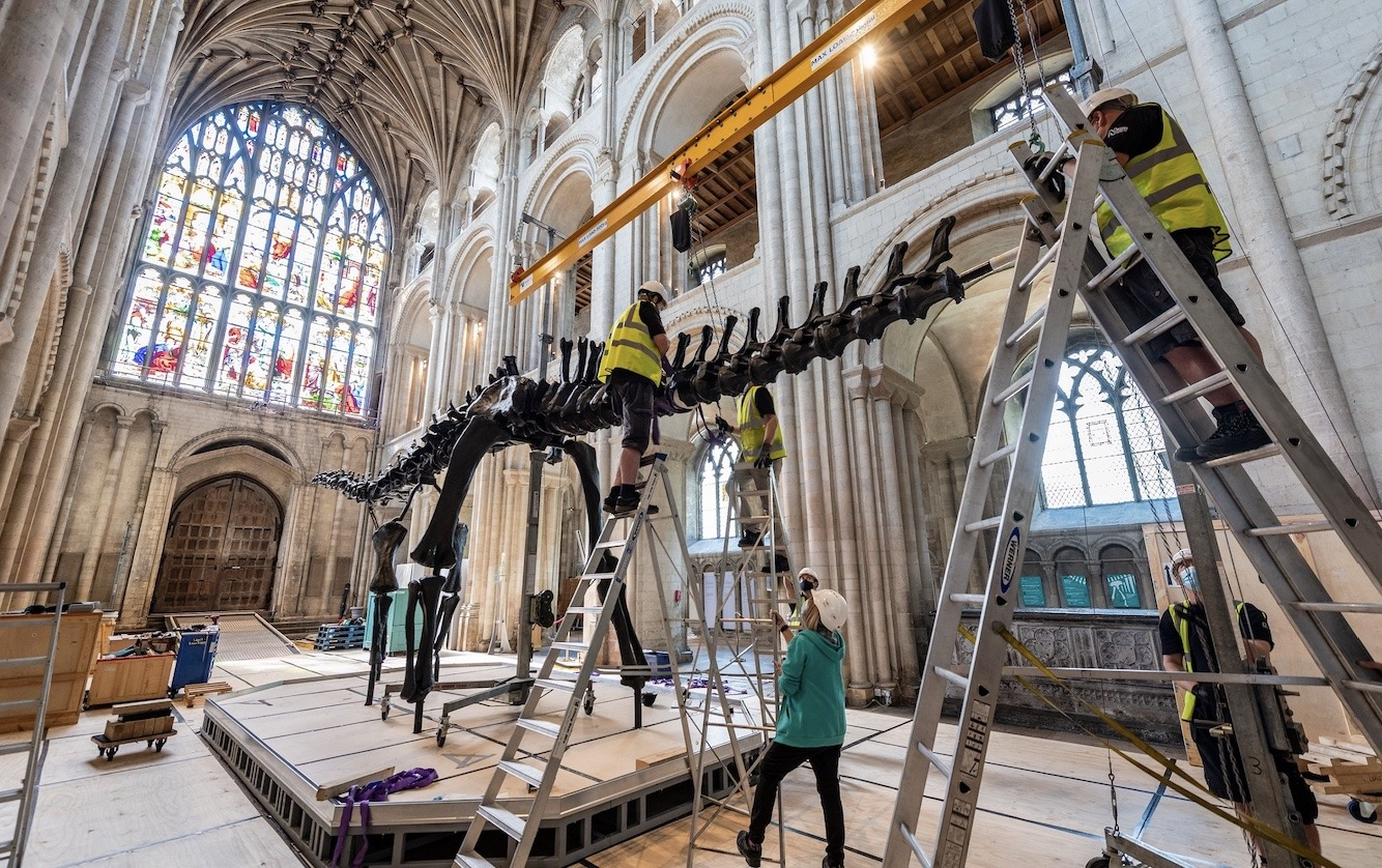 Dippy on Tour - Photos at Norwich Cathedral